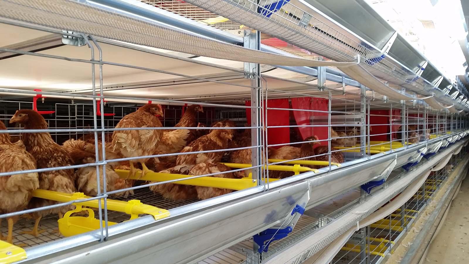 azienda avicola velletri roma